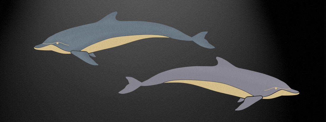 dolphin rcl login